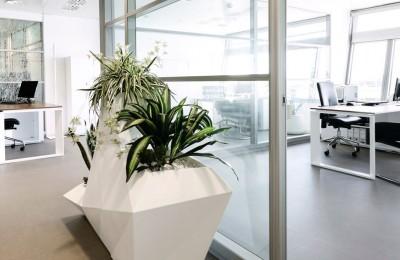 Vegetación oficina